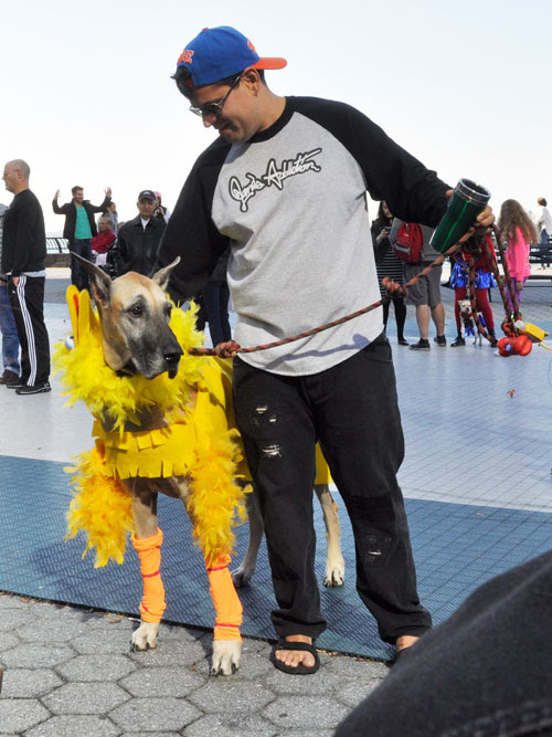 Big costumed Dog