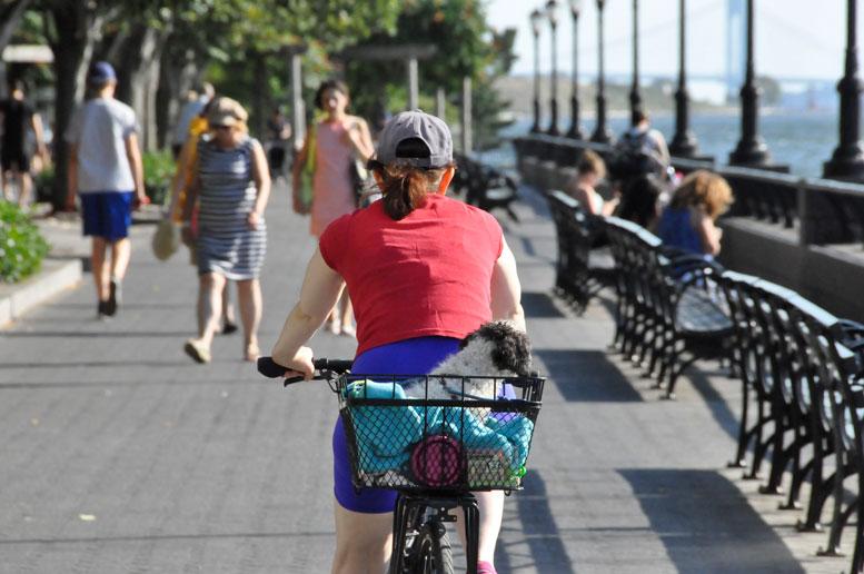 bikedogforaride_DSC0576