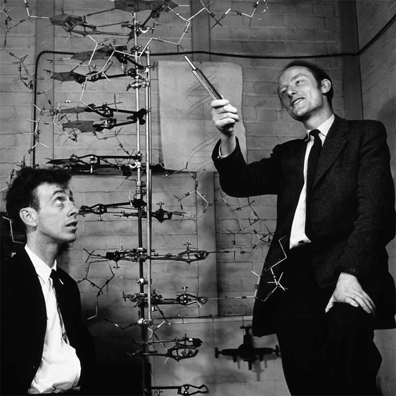 February 28, 1953: James Watson and Francis Crick announce to friends that they have determined the chemical structure of DNA