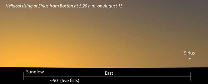 Sirius stands about 3 degrees above the southeastern horizon during its heliacal rising in Boston. (latitude 42 degrees N) on August 13, 2016. The star will be about 50 degrees to the right (south) of the bright spot near the horizon in the sunrise direction. Note that image is from Boston in 2016. Courtesy of Skyandtelescope.com Map_ Bob King_ Source_ Stellarium