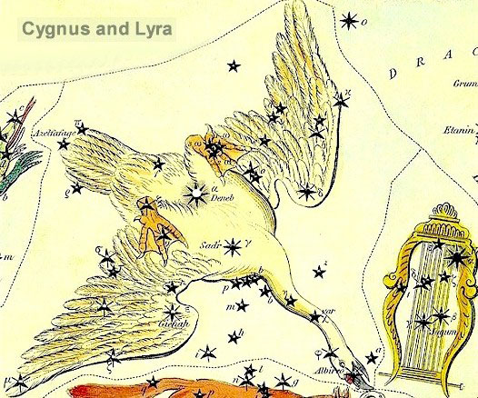 The constellation Cygnus the Swan.   The bright star Deneb represents the Tail of Cygnus.  Image via Constellation of Words.