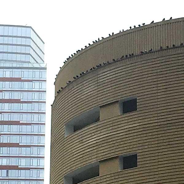 pigeonsatoptrinityparkinggarageIMG_3302